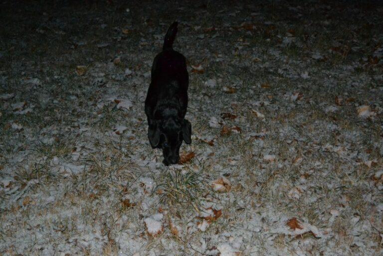 Siska in de sneeuw Zweden