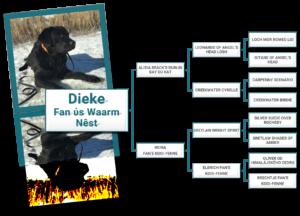 Stamboom Labrador Retriever Dieke