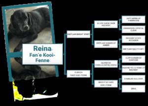Stamboom Labrador Retriever Reine Fan Ús Waarm Nêst